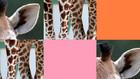 Vorschaubild 'Memoraetsel Giraffe'