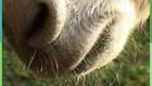 Vorschaubild 'Tierrätsel Esel'