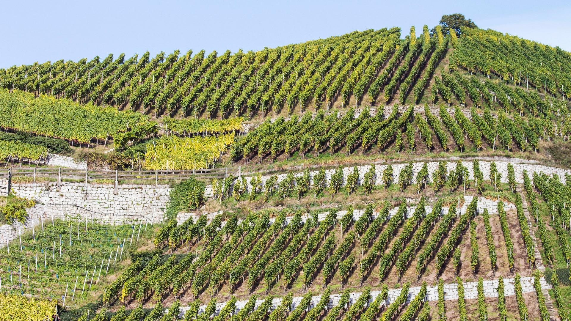 Weinanbaugebiet