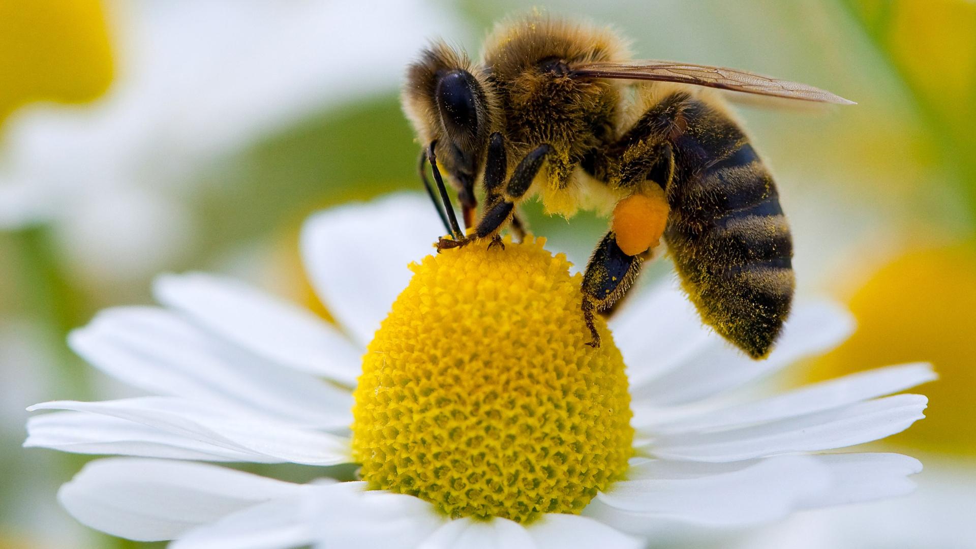 Bienen Die Seite Mit Der Maus Wdr